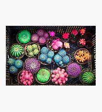 Cactus rainbow Photographic Print