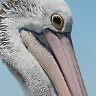 Mr. Pelican by sharon Wingard