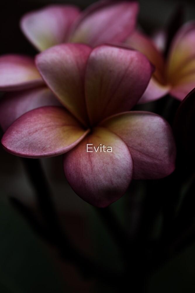 Das Wunder des Sommers von Evita