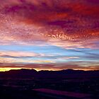 Nevada Morning by Barbara  Brown