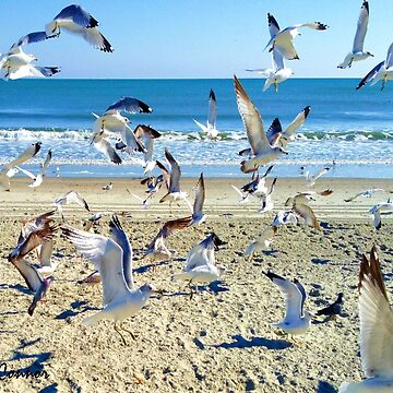 Seagulls at the Beach by JoeyOConnor