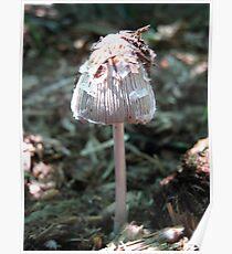 Ink Cap Fungi. Poster