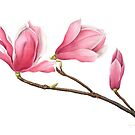 Magnolia by Cheryl Hodges