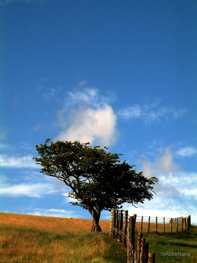 Tree on a Hill by newbeltane