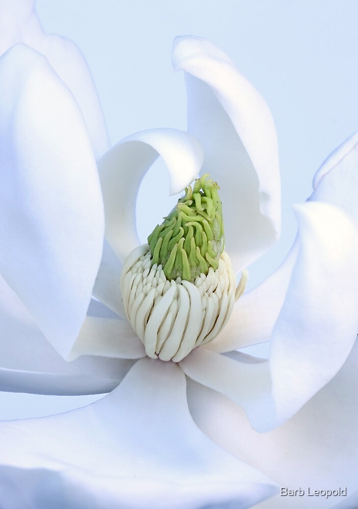 Magnolia Heart by Barb Leopold