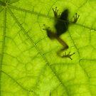 Frog on a Leaf by Alex  Bramwell