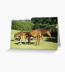 Brumby Mares & Their Foals. Greeting Card
