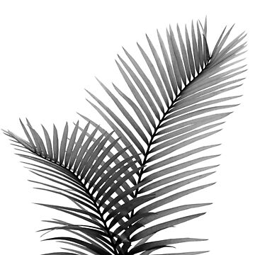 Intertwined - Palm Leaves in Love #1 #tropical #decor #art  by anitabellajantz