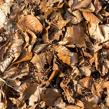Autumn Leaves Fallen by textural