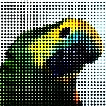 Parrot Amazone by AAAlves