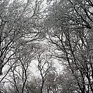 Snow Covered Trees 02 by Jason Moore
