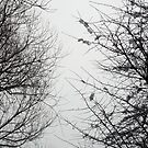 Snow Covered Trees 04 by Jason Moore