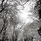 Snow Covered Trees 05 by Jason Moore