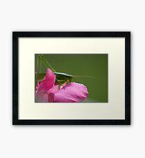 """""""Green Brush Grasshopper"""" Framed Print"""