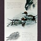Pin Tail Ducks. by Robert David Gellion