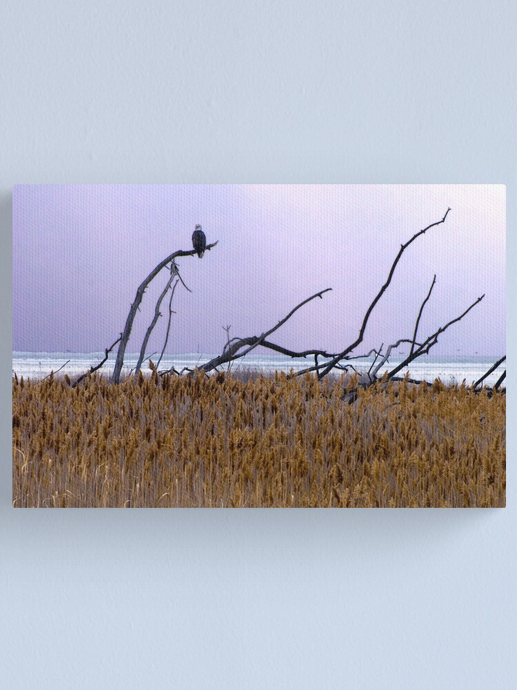 Alternate view of Eaglewood Canvas Print