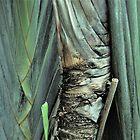 Botanical Abstract  by John  Kapusta