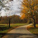 Kentucky Back Road in Fall by Virginia Shutters