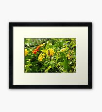 Community flower Framed Print