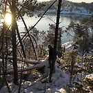 A walk to the forrest by the fjord by Annbjørg  Næss