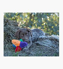 My Puppy Toys... Photographic Print