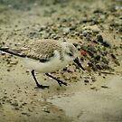 Sandpiper by Jonicool