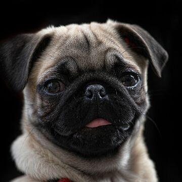 Pug puppy by JudyBJ