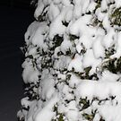 snowy hedge  by lissyS