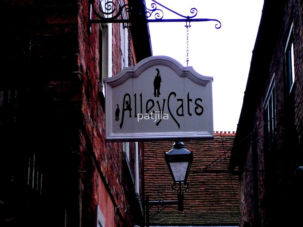 Alley Cats! by patjila
