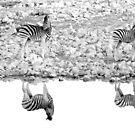 A Reflective Moment - Etosha National Park Namibia by Beth  Wode