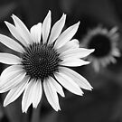 Black and White Cones by Kelly Cavanaugh