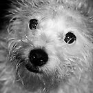 Fuzzy by Sarah Jennings