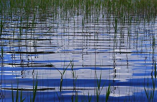 Water & Reeds by Paul Finnegan