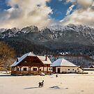 House by the mountains, winter time by naturalis
