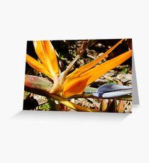Bright Orange Bird of Paradise-(Macro) Greeting Card