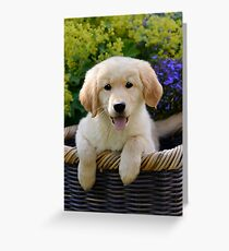 Charming Goldie Puppy Greeting Card