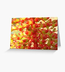 Yellow & Red Coral Flower-(Macro) Greeting Card