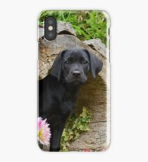 Lab puppy playing hide and seek iPhone Case