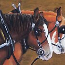 Clydesdale card by MelanieRose