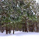 Winter Day ! by Elfriede Fulda
