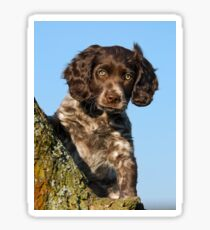 """I`m gorgerous"", German Spaniel puppy Sticker"