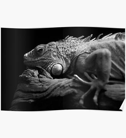 Iguana In Black Poster