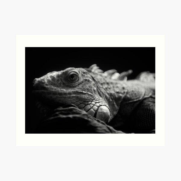 Iguana Up Close in Black and White Art Print