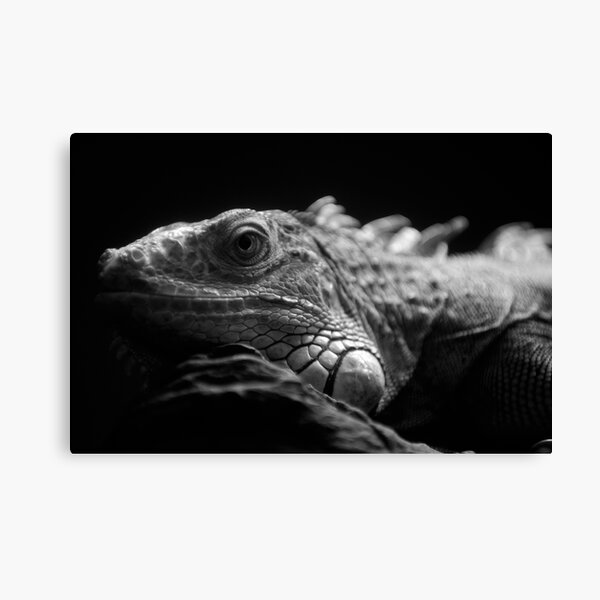 Iguana Up Close in Black and White Canvas Print