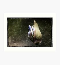 Agapanthus Bud Art Print