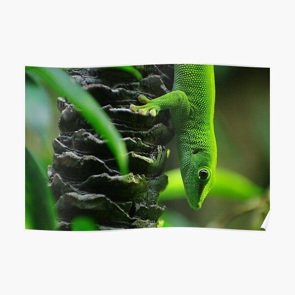 Bright Green Lizard Poster