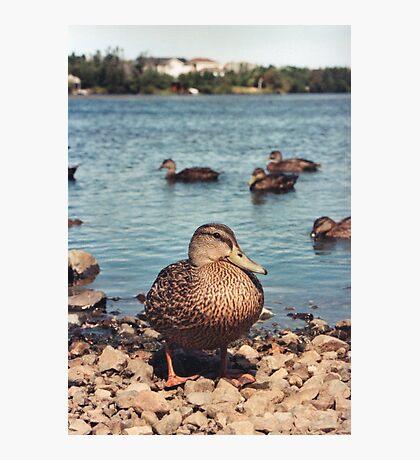 Happy Duck Photographic Print