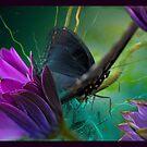 Flighty1 by Susan Ringler