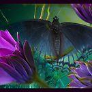 Flighty2 by Susan Ringler