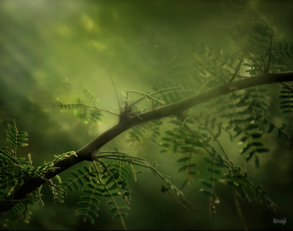 Meditation of Green by linaji